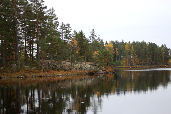 Skog som speglas i en sjö.